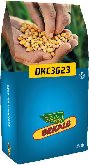 DKC 3623
